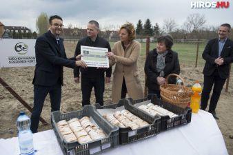 Új közösségi kert a Széchenyivárosban
